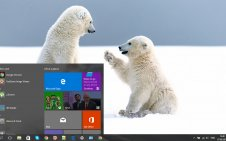Snow and Animals win10 theme