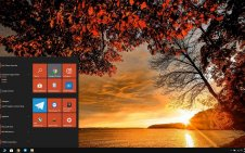 Autumn Tree win10 theme