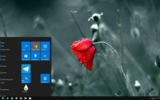 Poppy win10 theme