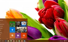 Flower win10 theme