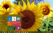 Sunflower win10 theme